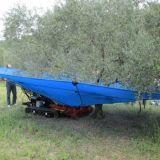 Intercettatore per olive, mandorle noci  Ombrello olivspeed climb