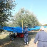Intercettatore per raccolta olive  Olivespeed go plus bosco macchine agricole