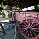 Carro agricolo  Maremanno anni 50
