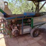 Cernitrice olive  Palumbo