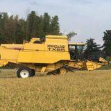 Mietitrebbia New holland Tx 65 plus riso