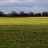 Terreno agricolo  In romania pianeggiante