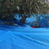 Foto 2 Abbacchiatore  - ombrello olivespeed go plus bosco