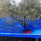 Foto 4 Abbacchiatore  - ombrello olivespeed go plus bosco